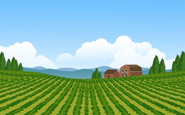 ブドウ畑のある美しい田園地帯 Premiumベクター