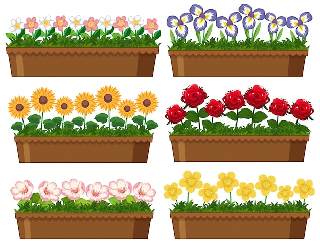 Beautiful flowers in clay pots on white background Free Vector