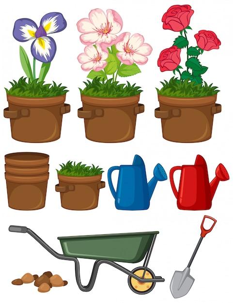 Bei fiori nel giardino su fondo bianco Vettore gratuito