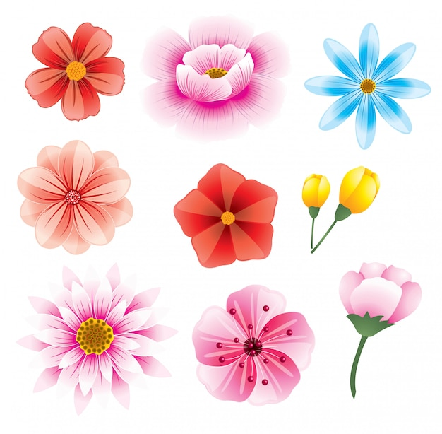 Beautiful flowers set illustrations Premium Vector