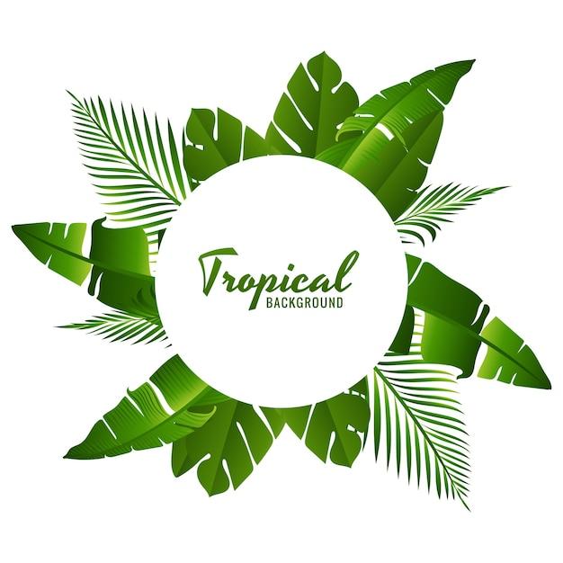 美しい緑の熱帯の葉 無料ベクター