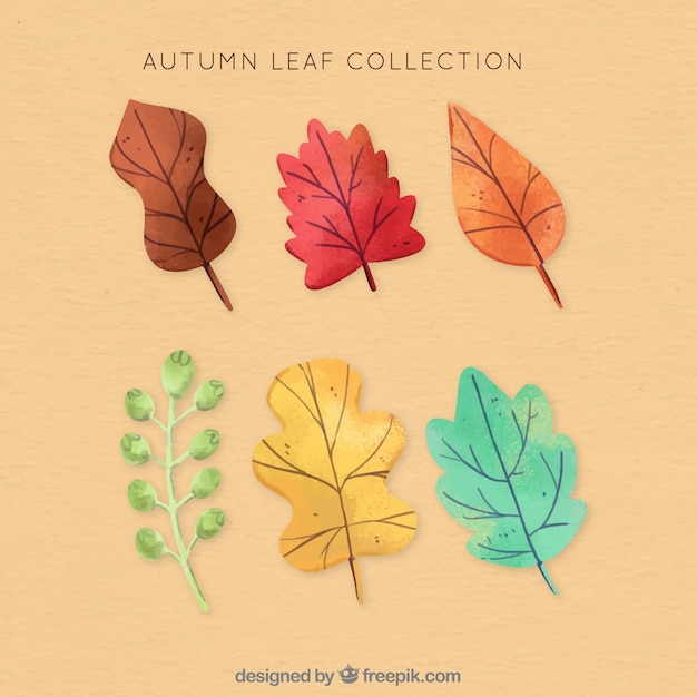 Beautiful hand drawn leaf collection