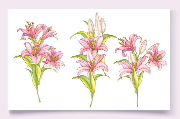 美しい手描きのユリの花のイラスト 無料ベクター