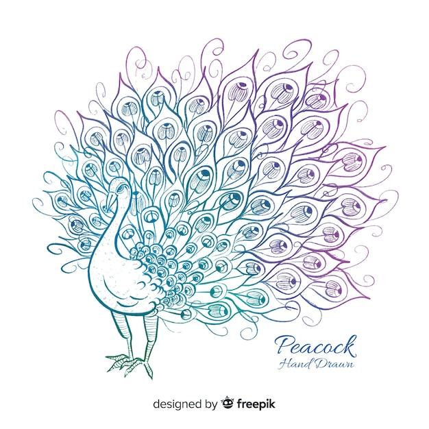 Beautiful hand drawn peacock Premium Vector