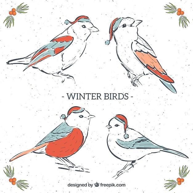 Beautiful hand-drawn winter birds