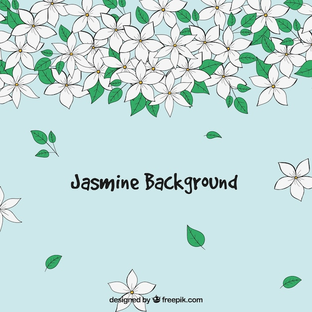 Beautiful jasmine background Free Vector