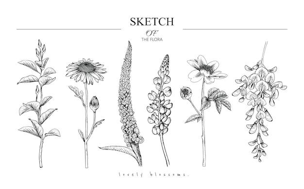 Красивые листья и цветочные рисунки Premium векторы