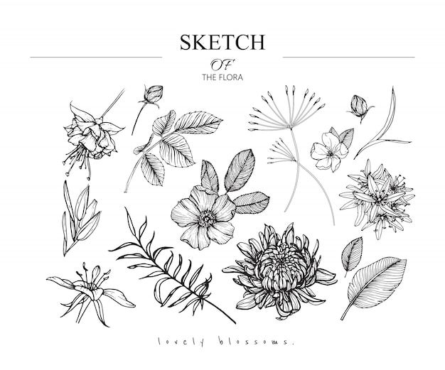 Beautiful leaf and flower drawings Premium Vector