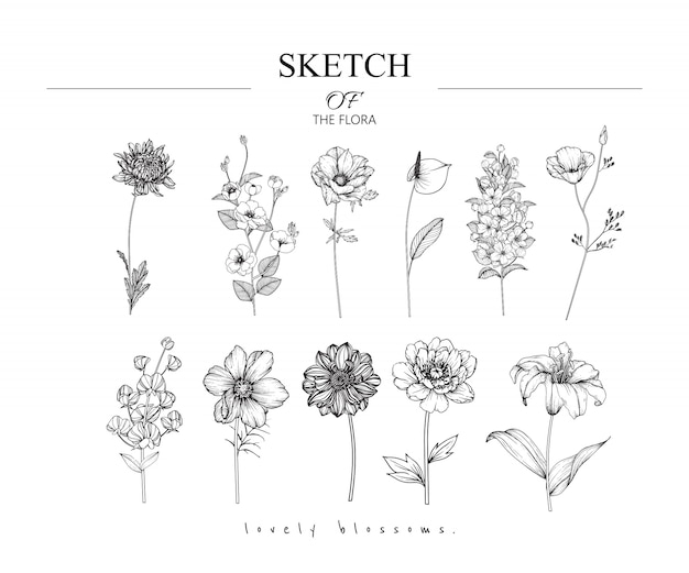 Beautiful leaf and flower drawings Premium Vector