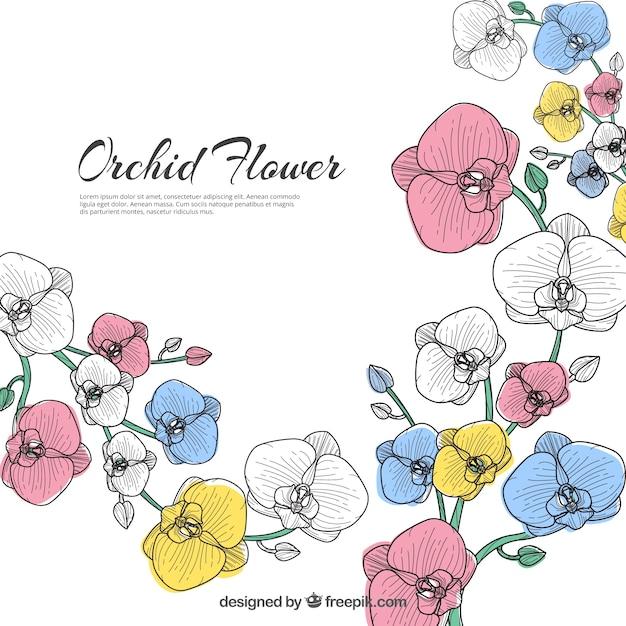 美しい蘭の花の背景 Premiumベクター