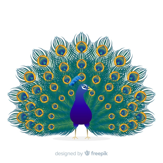 Beautiful peacock background Free Vector
