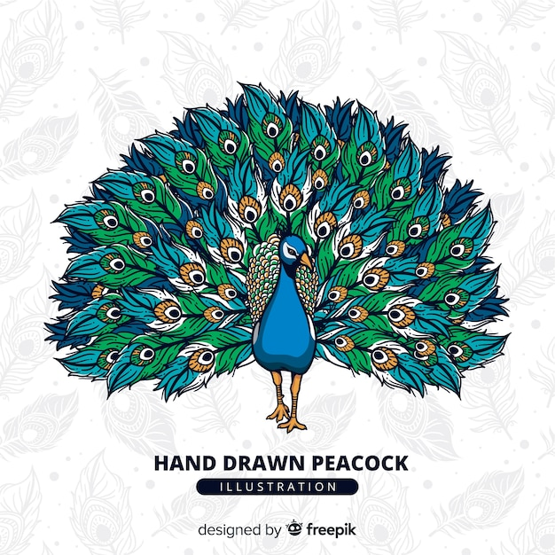 Beautiful peacock in hand drawn style Premium Vector