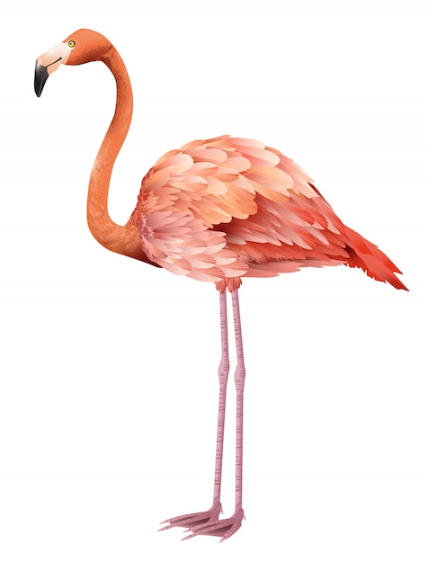 Beautiful pink flamingo standing. for banners, posters, leaflets and brochures. Free Vector