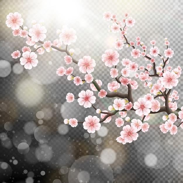 Beautiful sakura flowers. Premium Vector
