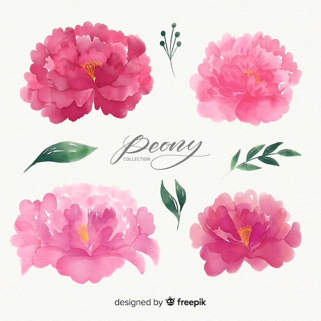Beautiful set of peony flowers Free Vector