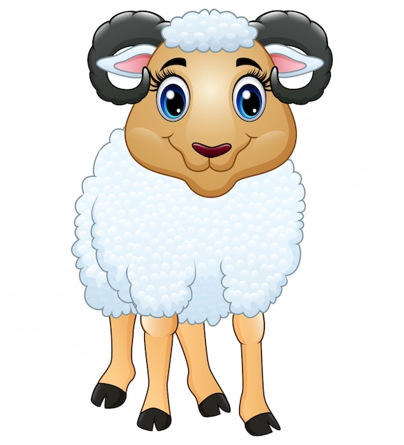 A beautiful sheep isolated on white Premium Vector