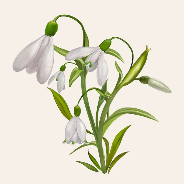 Beautiful snowdrop flowering plant illustration Free Vector