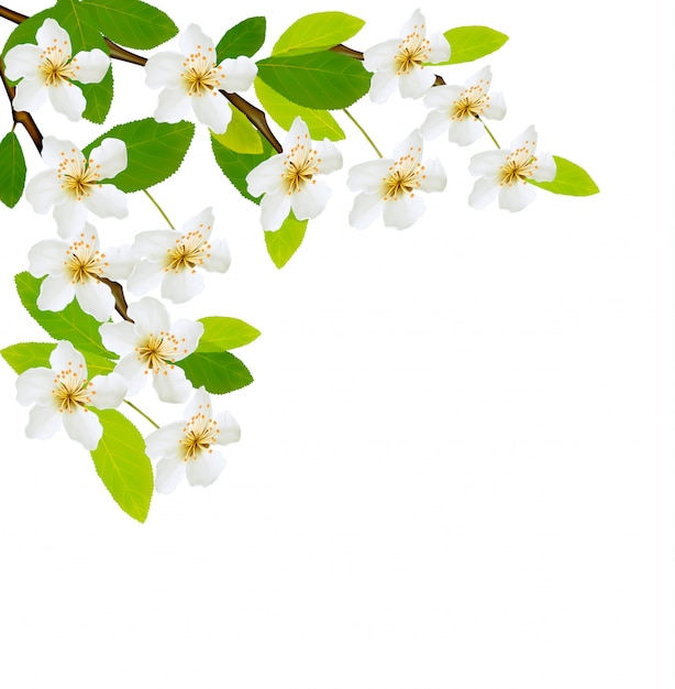 Beautiful spring white flowers isolated Premium Vector