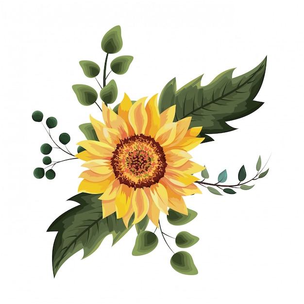 Beautiful sunflower drawing Premium Vector
