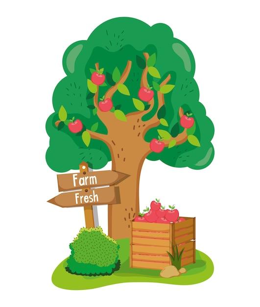 美しい木の果物 Premiumベクター