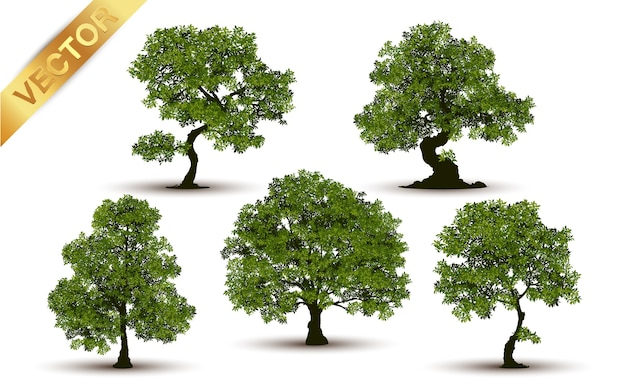Beautiful tree realistic on a white background. Premium Vector