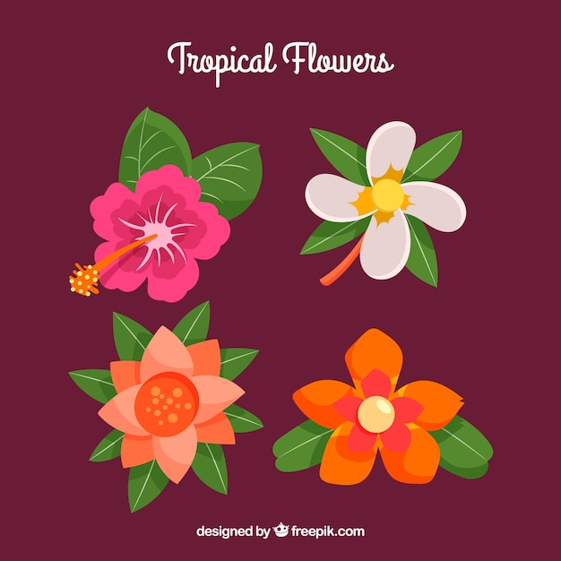 Beautiful tropical flowers set