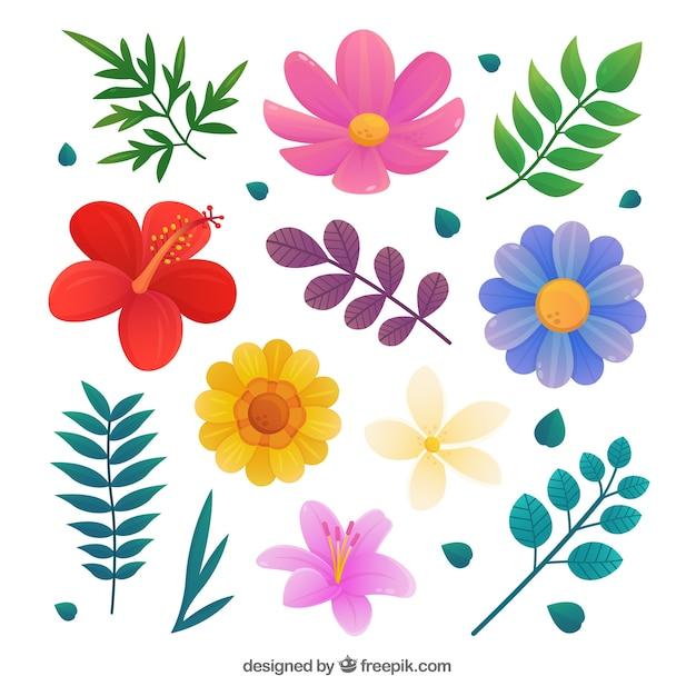 Beautiful tropical flowers set