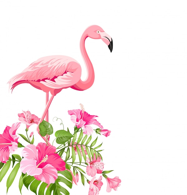 Beautiful tropical image with pink flamingo and plumeria flowers. Premium Vector