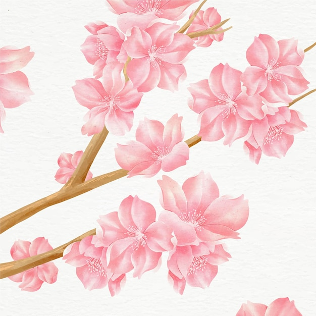 Beautiful watercolor cherry blossoms illustration Free Vector