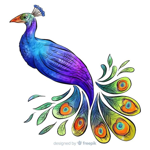 Beautiful watercolor peacock Free Vector
