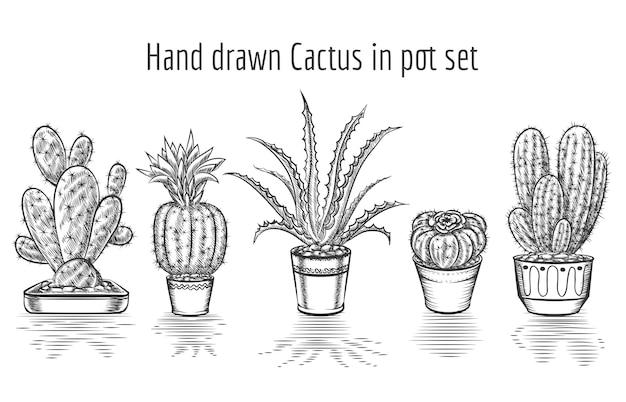 뷰티 선인장. 냄비 세트에 그려진 된 선인장을 손. 식물 예술, 요소 꽃 관엽 식물. 무료 벡터