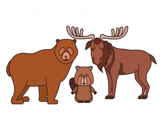 Orso del castoro e animale delle alci del canada Vettore gratuito