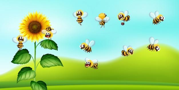 Bee and sunflower nature blackground Premium Vector
