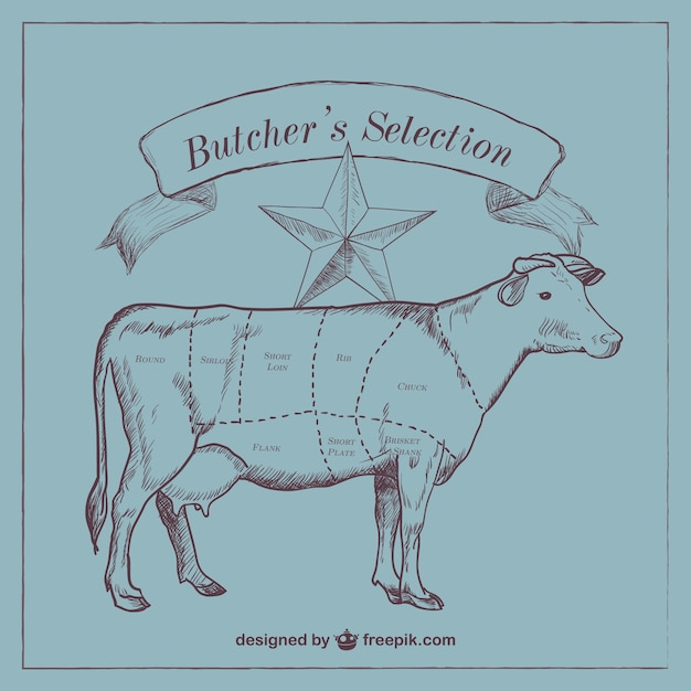 Beef cut diagram  Free Vector