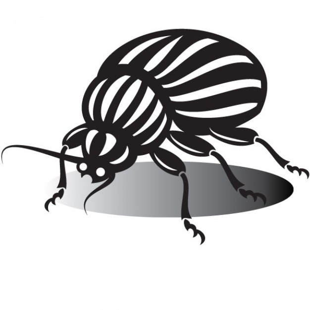 beetle drawing in black and white vector free download