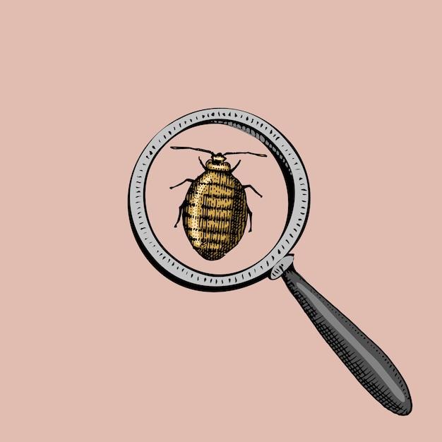 虫眼鏡とウイルスまたはテントウムシの下のカブトムシ。昆虫のアイコン。古いスケッチとヴィンテージのシンボルで描かれた刻まれた手。 Premiumベクター