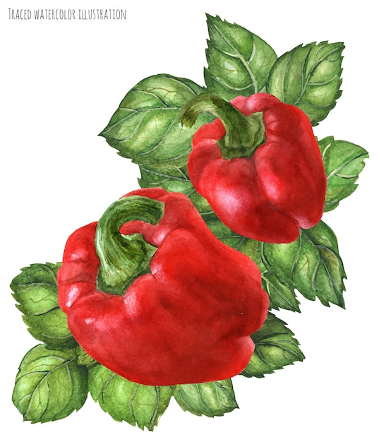 Bell pepper and green basil bouquet Premium Vector