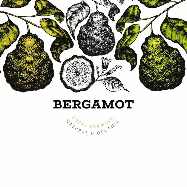 Bergamot branch design template. kaffir lime frame. hand drawn vector fruit illustration Premium Vector