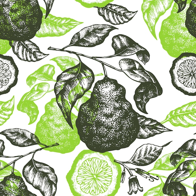 Bergamot branch seamless pattern. hand drawn vector fruit illustration. engraved style. retro citrus. Premium Vector