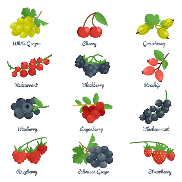 Berries flat icons set Free Vector