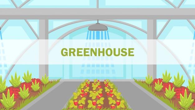 Berries growing in greenhouse vector web banner Premium Vector