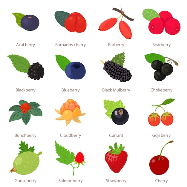 Berries icons set. cartoon illustration of 16 berries vector icons for web Premium Vector