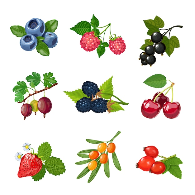 Berries of trees and shrubs set Free Vector
