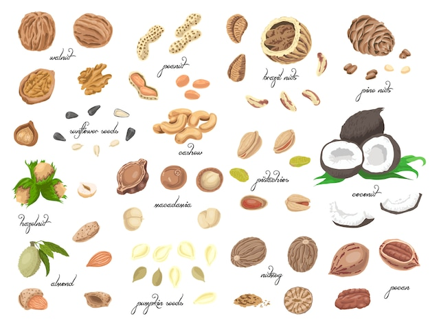 Big collection of isolated colored nuts and seeds Premium Vector