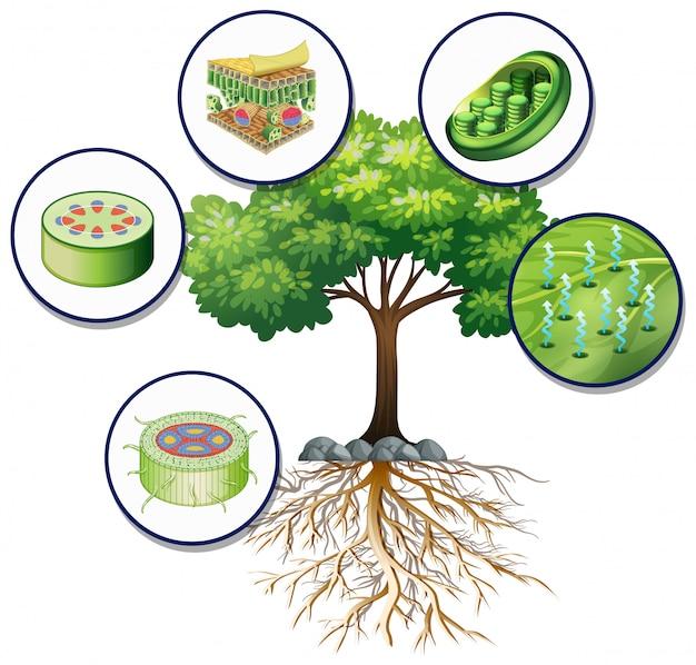Большое зеленое дерево и близкие растительные клетки Бесплатные векторы