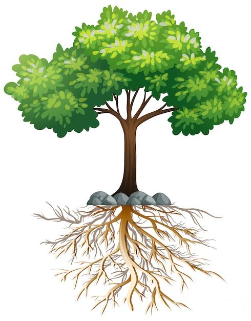 Большое зеленое дерево с корнями под землей на белом Бесплатные векторы