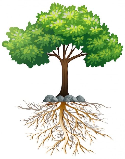 Big green tree with roots underground on white Free Vector