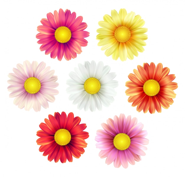 Big set of beautiful colorful spring daisy flowers isolated Premium Vector