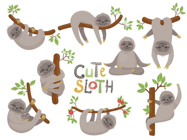 Big set of cute sloths character in various positions Premium Vector