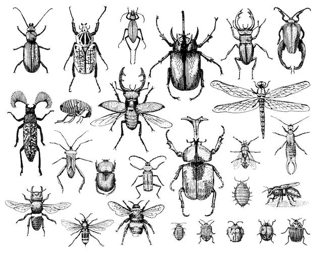 Большой набор насекомых жуков жуков и пчел много видов в винтажном стиле рисованной гравюра гравюра на дереве иллюстрации. Premium векторы